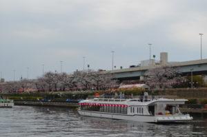 デッキから見た桜